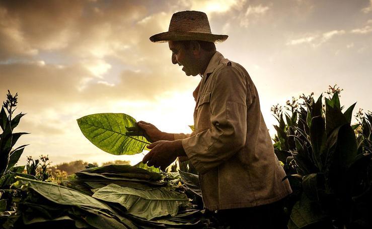 La cuna del tabaco cubano
