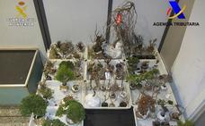 Requisan en el aeropuerto de Loiu 85 plantas y bonsais procedentes de Japón