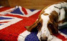 El perro, un gran amigo para la emancipación de los discapacitados