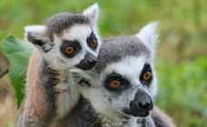 Madagascar, la paradisíaca isla de los baobabs y los lémures