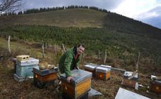 Iñigo Macías: «Desde que me picaron las abejas, sólo pensaba en tener colmenas»