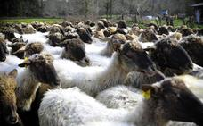 Productores de Ugao comercializan una crema de queso de oveja
