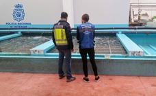 Desmantelan una red que vendía almejas de contrabando en Euskadi