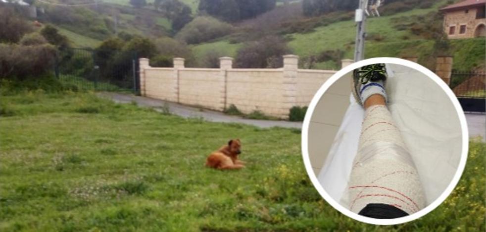 Un perro con tres denuncias por mordeduras ataca a un hombre que hacía deporte en Muskiz