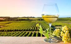 La Denominación de Origen Rioja elige sus 25 mejores blancos