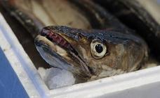 Inventan una máquina que puede acabar con el anisakis en los pescados