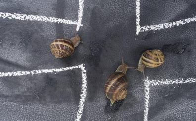 Los caracoles tienen memoria y los científicos saben transplantarla