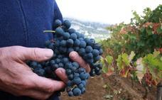 Detienen a ocho personas en Rioja Alavesa al trabajar de forma fraudulenta