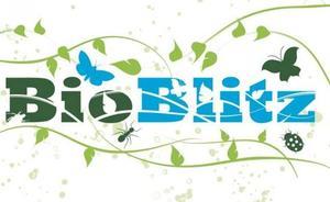 Biodibertsitatea katalogatzeko modu berri bat: Bioblitz