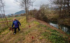 El bosque de ribera recupera el terreno perdido en Busturialdea y Lea Artibai
