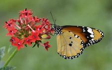 Plentzia creará un oasis de mariposas en Gazteluondo