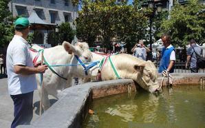 Un campeonato de perros pastor precederá a la feria de San Juan de Orduña