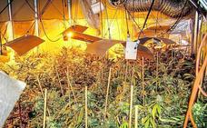 Cultivo de marihuana, una epidemia en Álava