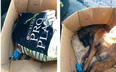 Ortuella pide ayuda para identificar al dueño de un perro muerto