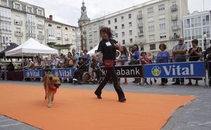 Moda a beneficio de APASOS en Vitoria