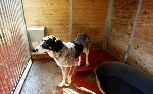 Unos 104.000 perros y 33.000 gatos son abandonados cada año en España
