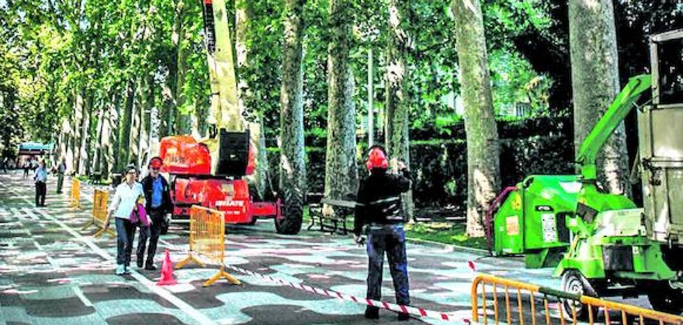 Vitoria podará y controlará los árboles de La Senda, que de momento se libran de la tala