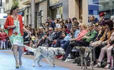Animales de Apasos participan en un desfile al aire libre en Vitoria