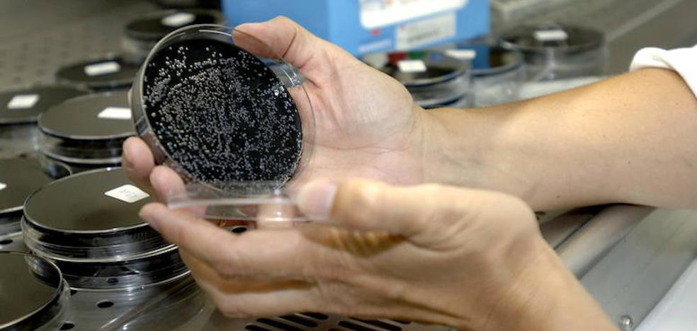 La legionella: una enfermedad que se transmite en gotitas de agua que forman el aerosol típico de duchas y grifos
