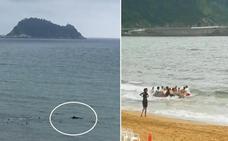 Socorristas y bañistas salvan a un ballenato varado en la playa de Zarautz