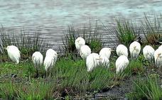 Una ruta para conocer las manías de las aves acuáticas marinas en Santander