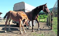Denuncian a un centro foral ante la Fiscalía por maltratar a 14 animales en Galdames