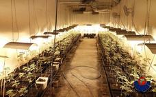Desmantelan un cultivo de más de 400 plantas de marihuana en una nave industrial de Galdakao