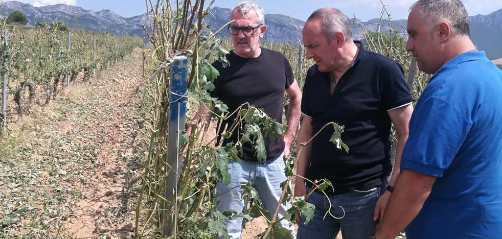 Las lluvias del sábado en Rioja Alavesa afectaron a 300 hectáreas de viñedo