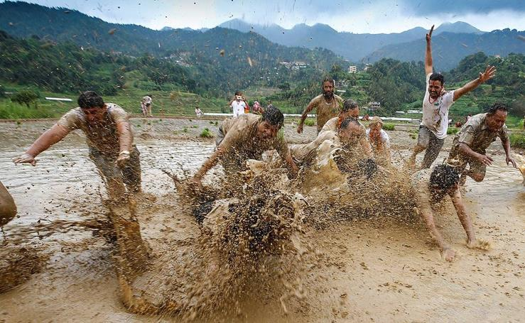 Fiesta en los arrozales