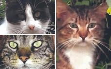 El Ayuntamiento ha esterilizado a 222 gatos callejeros en el último año