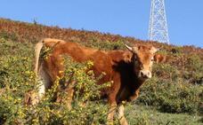 La Diputación acota tres zonas de pastos en Triano para evitar conflictos por el ganado suelto