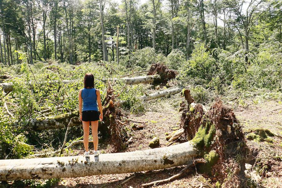 Así ha quedado el bosque de Legaire tras el tornado