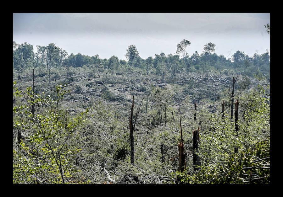 Técnicos de la Diputación Foral de Álava evalúan los daños del tornado en la Sierra de Entzia