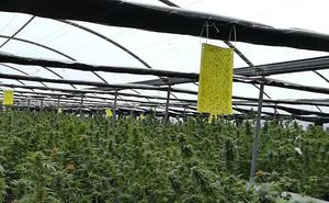 Desmantelan una plantación de marihuana en Sopela que explotaba a inmigrantes en condiciones infrahumanas