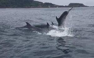 Un grupo de delfines visita la costa vasca