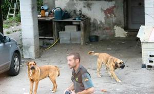 El dueño de los perros que mataron a un anciano en Asturias dice que «le querían con locura»