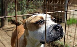 Ortuella prepara una normativa de identificación canina pionera en España