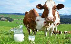 Los peligros de la venta directa de leche cruda de vaca