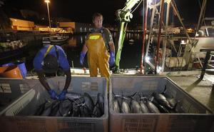 La flota descarga 735 toneladas de bonito en Bermeo y Ondarroa