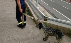 Rescatan a un perro en la N-636 en Atxondo