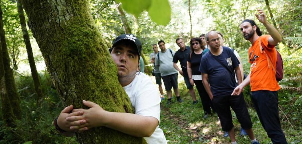 El bosque que cura la mente