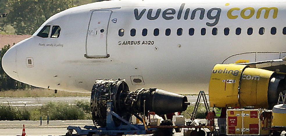 La colisión de un buitre con un avión cerca del aeropuerto de Bilbao llega al Senado