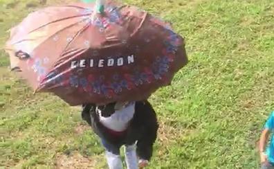 Celedón se adelanta cuatro días y ya ha bajado en Guatemala