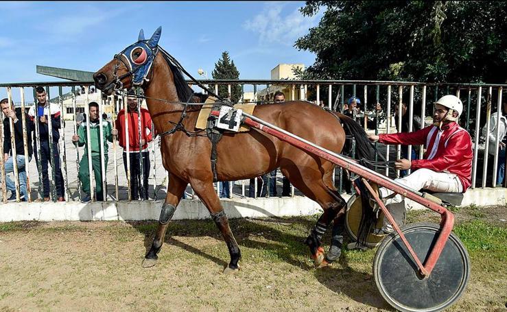 El Petit Longchamp languidece