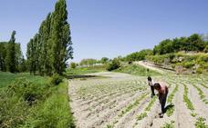 Sektoreko langileentzako nekazaritza ekologikorako lurrak eskuragarri ditu Bizkaiak