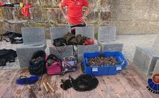 Incautan 75 kilos de percebes a tres pescadores furtivos en San Juan de Gaztelugatxe