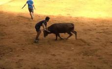 Las vaquillas convencen al Iradier