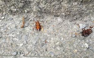 Los vecinos de Basurto alertan de una «plaga» de cucarachas