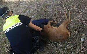 Y 'Bambi' llegó hasta Zaramaga