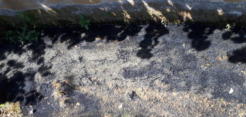 La extinción del incendio en la quesería Aldanondo provoca un vertido en el Egileor a su paso por Salvatierra